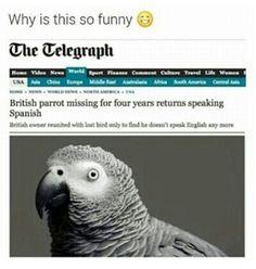 British parrot missing for four years returns speaking Spanish