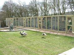 Image detail for -New Pheasant aviaries at Blackbrook Apr 09 » Blackbrook Zoo Gallery