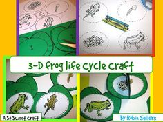 3D Frog Life Cycle Craft by Robin Sellers