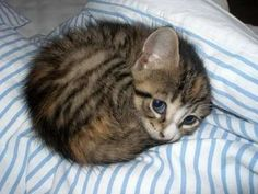 30 Adorable Kittens That Couldn't Get Any Cuter If They Tried.