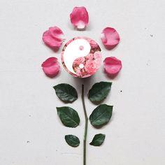 🌹 Dăruiește o floare mai deosebită: popsocketul Yin Yang Roses  . . . #popsocket #popsockets #accesorii #accesoriitelefoane #accesoriigsm #accesoriiutile #popsocketfloare #yinyangroses #popsocketyinyang #floarespeciala #dăruiește Pop Socket, Yin Yang, Mai, Rose, Ethnic Recipes, Pink, Roses
