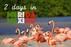 Merida, is the capital city of Yucatan, where theSpanish conquerors built their colonial city after destroying the Maya city of T'hó and used the stones of the remains to build their colonia…