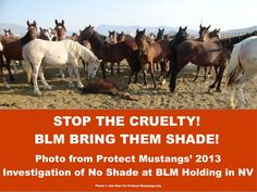 protect our horses and burros! | Calling all internet warriors YOU are needed this week! Wild horses ...
