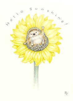 Hedgehog Sunflower - Peter Cross: