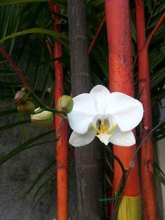 Monstet on the flower