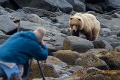 Bears are making a comeback across North America, and here's what you need to know if you cross paths with one.