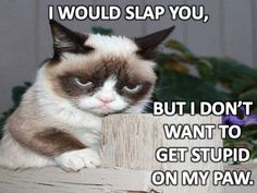 Grumpy cat grumpy cat humor, grumpy kitty, grumpy quotes, cat m Grumpy Cat Quotes, Funny Grumpy Cat Memes, Funny Cats, Funny Animals, Funny Memes, Silly Memes, Silly Cats, Memes Humor, Adorable Animals