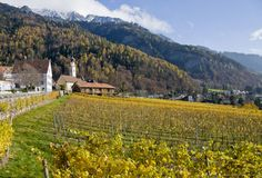 Vineyards at Jenins, Grisons, Switzerland