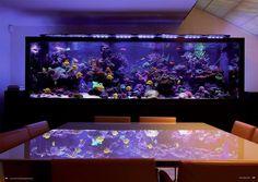 Aquarium Terrarium, Aquarium Setup, Home Aquarium, Aquarium Design, Aquarium Ideas, Aquarium Sharks, Marine Aquarium, Aquarium Fish Tank, Cool Fish Tanks