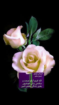 Good Morning Flowers Gif, Good Morning Messages, Morning Wish, Rose, Plants, Allah, Good Morning Wishes, Pink, Plant