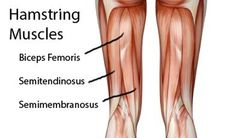 Looking for the best hamstring stretches? Keeping your hamstrings loose is key for injury-free running. Best Hamstring Stretches, Hamstring Muscles, Hamstring Workout, Hamstring Curls, Thigh Muscles, Knee Exercises, Easy Stretches, Tight Quads, Tight Hamstrings