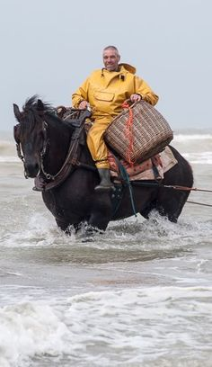 Paardenvissers: Crab fishing by horses in Flanders in Belgium / Pferdefischer: Hoch zu Ross auf Krabbenfang in Flandern/Belgien (Blogpost)