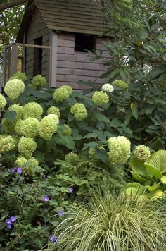 Add a hydrangea and cranesbill to side garden? Between peonies and hosta? Limelight would be pretty....