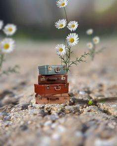 No photo description available. Miniature Photography, Cute Photography, Creative Photography, Beautiful Images, Beautiful Flowers, Arte Peculiar, Love Wallpaper, Cute Illustration, Belle Photo