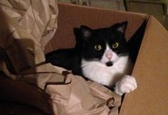 """When Milo arrived at The Animal Rescue Alliance in Kansas City, the then five-year-old kitty was stuck in a carrier with a note attached: """"My name is Milo, and my people can't take care of me."""" The cat's former family had also enclosed a $20 bill. Hilary Boorstein had recently started volunteering with The Animal …"""