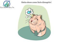 Gatto obeso come farlo dimagrire   Elicats Holistic Pets