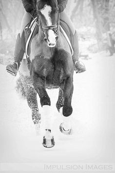 I love horses SOOO much!!
