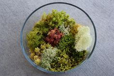 Related Buy Plants, Terrarium, Fresh, Mixed Media, Live, Etsy, Projects, Terrariums, Log Projects