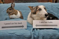 """Two animal shamings in one photo; however, the bunny is like """"Kiss my cottony ass, I regret nothing!"""" (via I Love My Dog)"""