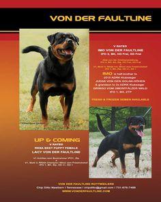 Von Der Faultline Rottweilers Chip Ditto Newburn, Tennessee chipditto@gmail.com 731-676-7466 www.vonderfaultline.com