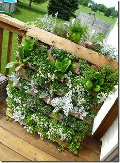 How To Make A Wood Pallet Vertical Garden DIY Project      http://shelookethwell.blogspot.com/2011/06/super-cool-garden-project.htm  and here is the tutorial on how to make it  http://lifeonthebalcony.com/how-to-turn-a-pallet-into-a-garden/