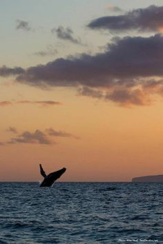 Crazy Whales, West Maui