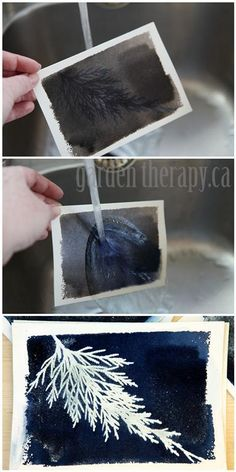 Making sun prints is a sun summer project. Using a cyanotype solution on paper, you set plants under glass and rinse to reveal the print! Full instructions on how to do this project in the link. #summer #crafts #sunprint