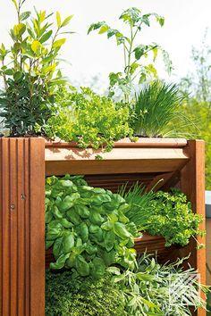 Sattes Grün. Hast Du schon Pläne für Deinen Garten? Hier ein paar Tipps für Urban Gardening. #Urbangardening #Garten #Balkon #Terrasse #Inspiration #Pflanzen #Gartentips #Ratgeber Urban Gardening, Plants, Indoor Courtyard, Garden Planning, Shade Perennials, Balcony, Couple, Tips, City Gardens