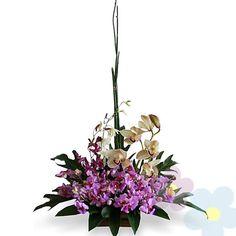 Arreglo de Orquideas Aganisia