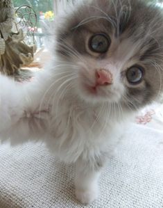 """""""Do you know how to use a camera or do I have to show you?"""" - Little Miss Scrappy Kitten"""