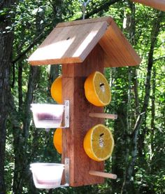 Cedar wooden birdfeeder for orioles - serve fruit and jelly from this double sided hanging bird feeer to attract fruit eating wild birds - - Oriole Bird Feeders, Large Bird Feeders, Bird Feeder Poles, Suet Bird Feeder, Unique Bird Feeders, Bird House Feeder, Hanging Bird Feeders, Bird Food, Wild Birds