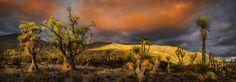 Sunny Background Desert Field - Sunny Background Desert Field, Tehuacán - Cuicatlán biosphere reserve, Puebla, México.
