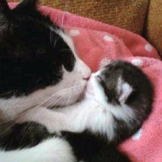 OMG ! so cute, looks like one of my cats !