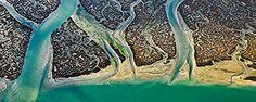 scinexx | Forscher entdecken Riff in Amazonasmündung: Korallenriff beherbergt…
