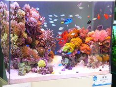 Saltwater Aquarium Decorations For Your Marine Tank Now for the enjoyable part-- saltwater fish tank designs are one element of marine fish keeping where you Saltwater Aquarium Beginner, Saltwater Aquarium Setup, Coral Reef Aquarium, Saltwater Fish Tanks, Aquarium Design, Marine Aquarium, Aquarium Fish Tank, Aquascaping, Marine Fish Tanks
