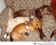 aww!  it's a dog and kitty snuggle pile!