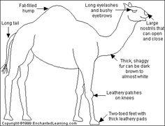 Camel Printout - EnchantedLearning.com