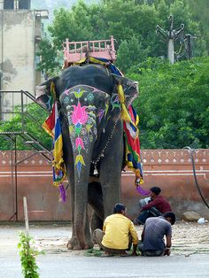 Ride on a elephant in India