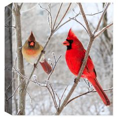 This photography was taken on a snowy winter day in central Ohio by Garry Wilcox. A rare photo of a male and female cardinal. This beautiful photograph is created on high quality canvas. Features - Ar