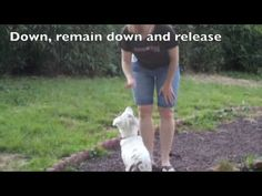Training a deaf puppy