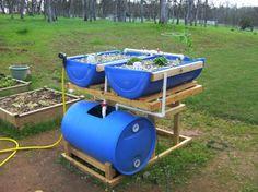 aquaponics  | Barrel Aquaponics System - Backyard AquaponicsBackyard Aquaponics