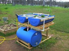 aquaponics  | Barrel Aquaponics System - Backyard AquaponicsBackyard Aquaponics