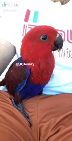 Funny Birds, Cute Birds, Pretty Birds, Beautiful Birds, Animals Beautiful, Cute Baby Animals, Funny Animals, Funny Parrots, Disney Princess Art