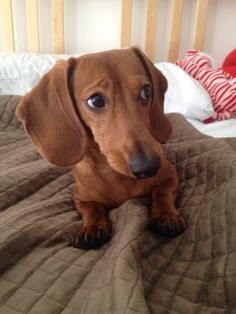 What do you mean I have to get off the bed? Instagram: frank_the_wiener