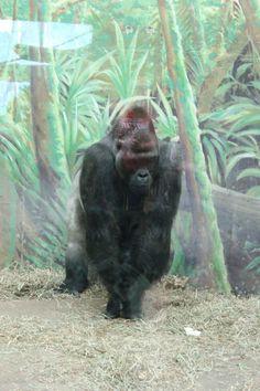 Personal Photo, Monkey, Photos, Animals, Pictures, Animais, Playsuit, Animales, Animaux