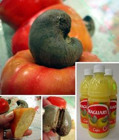 12 Amazing, Odd and Unusual Fruits - WebEcoist Exotic Fruit, Tropical Fruits, Exotic Plants, Weird Fruit, Strange Fruit, Asian Vegetables, Fruits And Vegetables, Cashew Apple, Home