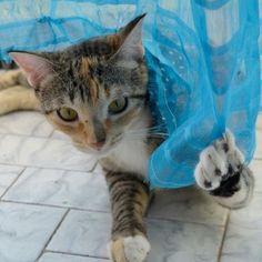 Como deixar o seu gato sozinho em casa e feliz | Ronronar
