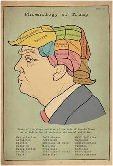 Phrenology Of Trump Poster at AllPosters.com