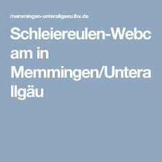 Schleiereulen-Webcam in Memmingen/Unterallgäu