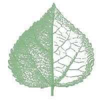 aspen leaf outline